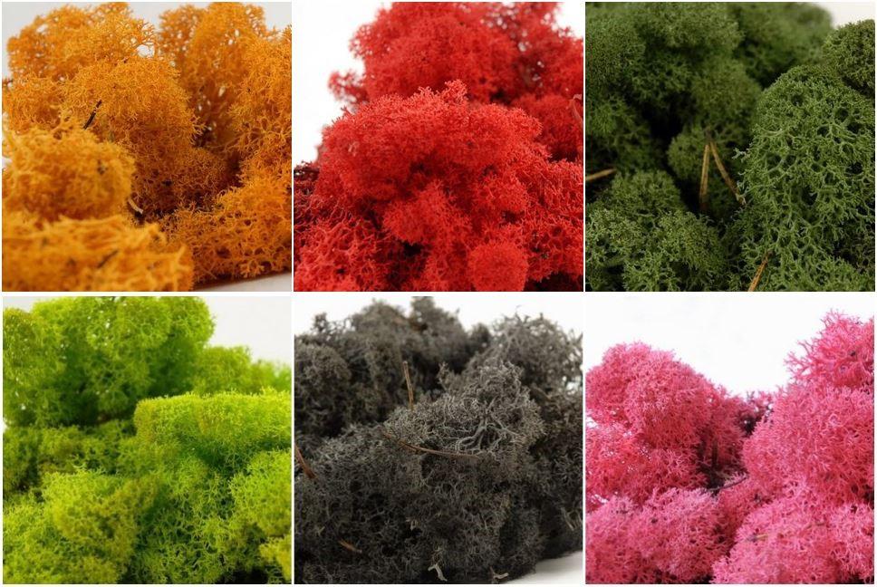 冰島苔蘚掛畫有多種尺寸和顏色可以選擇。