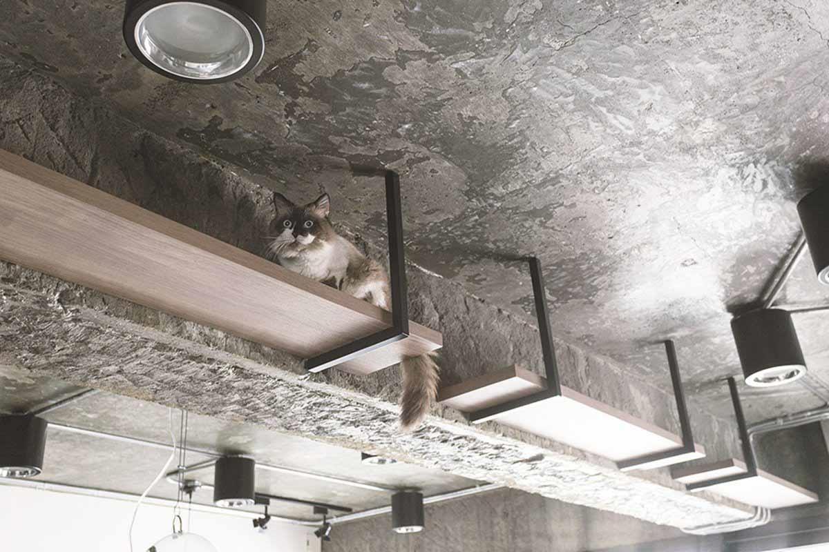 利用結構樑規劃專屬通道。在結構樑旁邊,以鐵件、實木建構三個分開的層板,成為專屬的貓咪通道,與Loft風的空間設計相呼應。