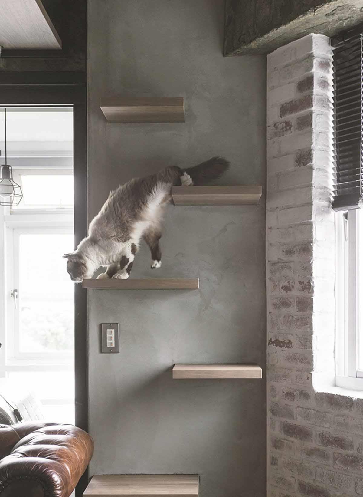 沿窗台規劃的貓跳台。因為貓咪喜歡坐在窗台看窗外,因此刻意沿窗台區規劃另一個實木製作的貓跳台,讓貓咪可從窗台跳到跳台,再走上結構樑旁邊的專屬貓道。