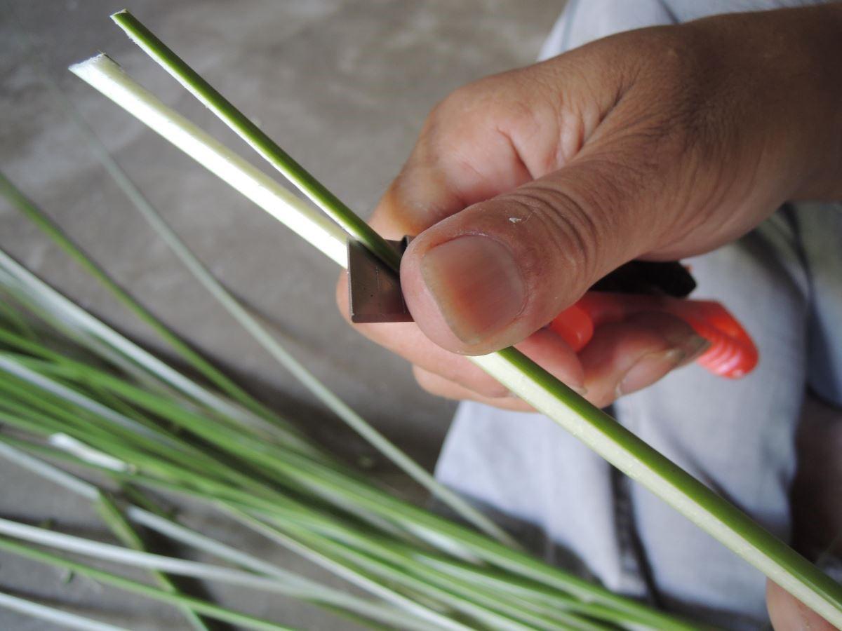 輪傘草的剖皮過程。