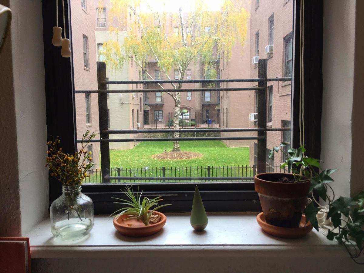 紐約的工作室看出去便是中庭的大樹,隨著時序不同,而帶給Vita Yang作畫的靈感。