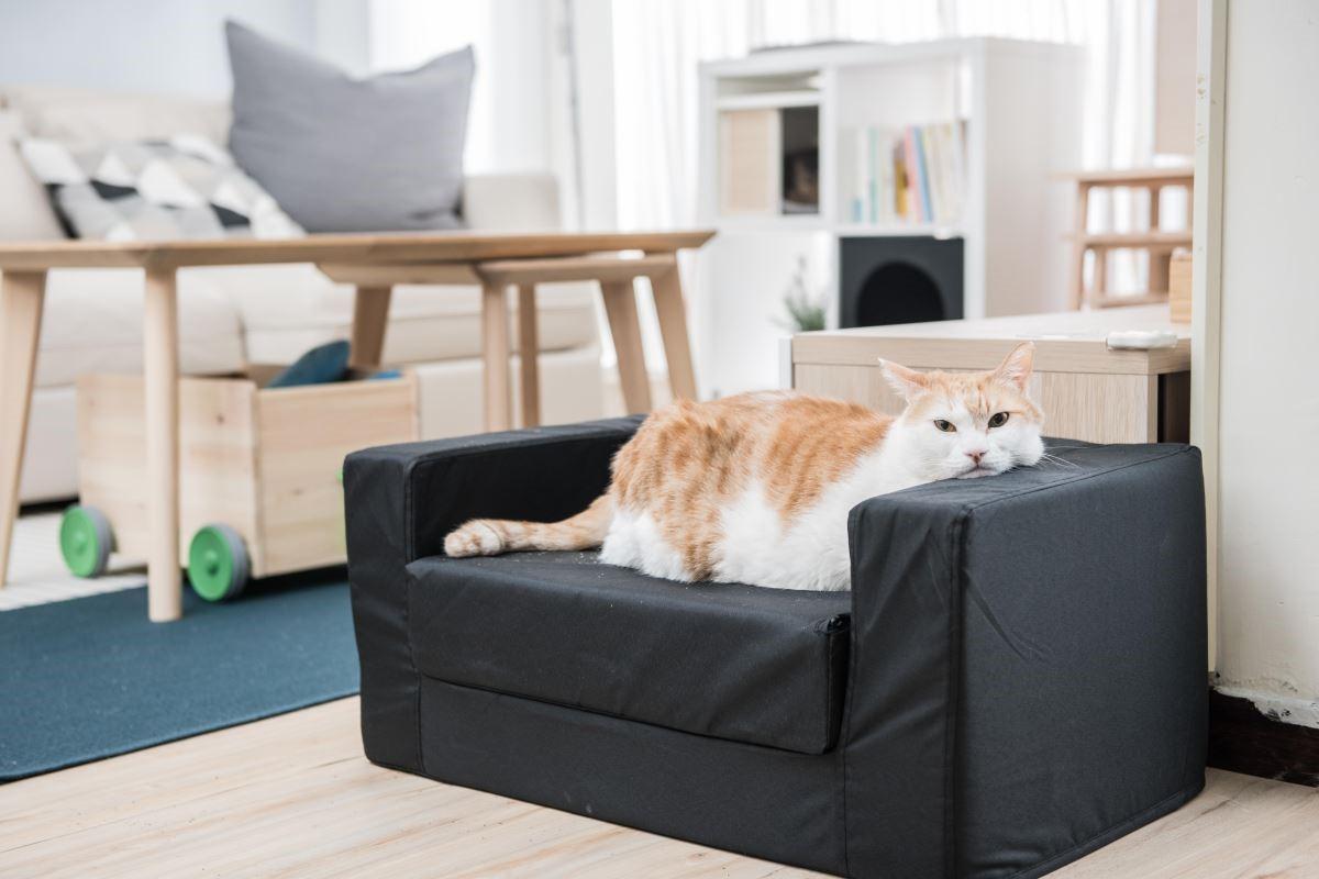 貓界網紅黃阿瑪的後宮 X IKEA驚喜大改造!