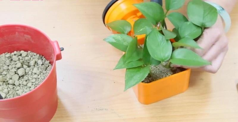 FECA 非卡空間魔法的吸盤式收納盒,沒有收納物品還能 DIY 變身小盆栽!>>同場加映:直播影片_職業媽媽的小廚房大變身